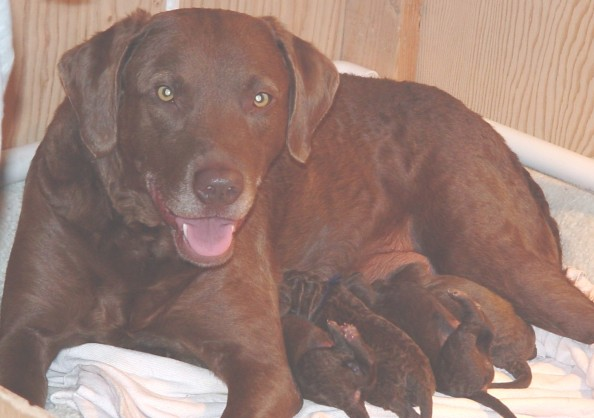 Nellie's puppies birth day.