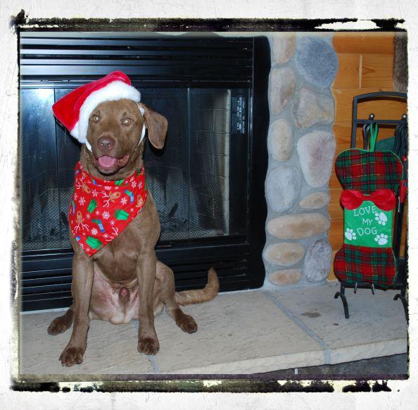 Gambler being Santa.