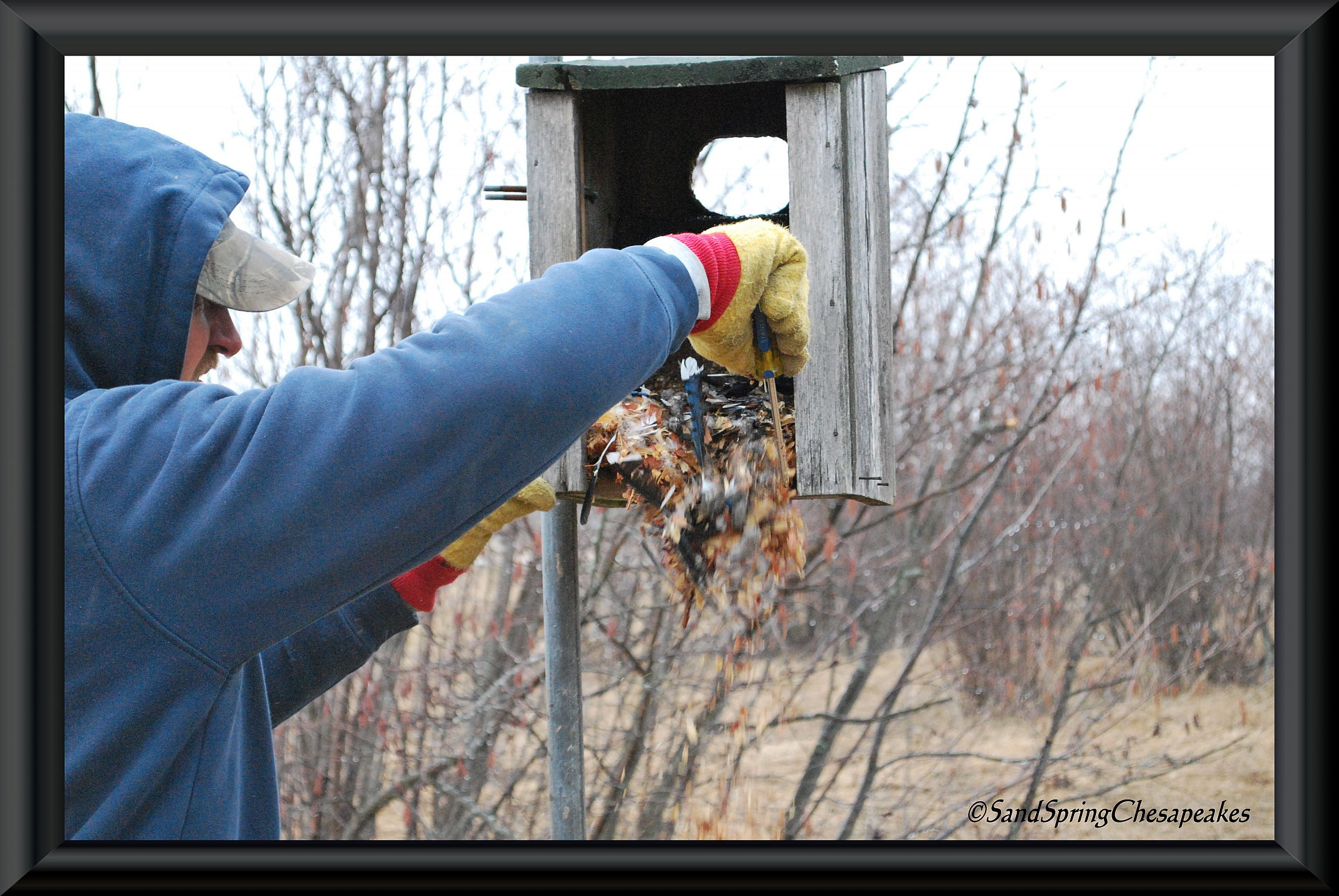 wood duck house cleaning