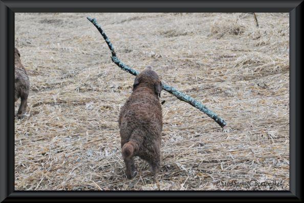 Nellie with big stick.