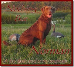 Project16 - Norman3