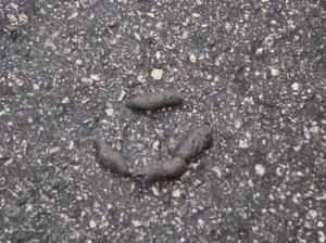 Mystery Poop.
