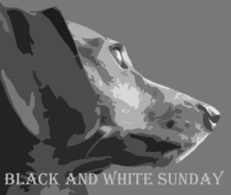 blackandwhite