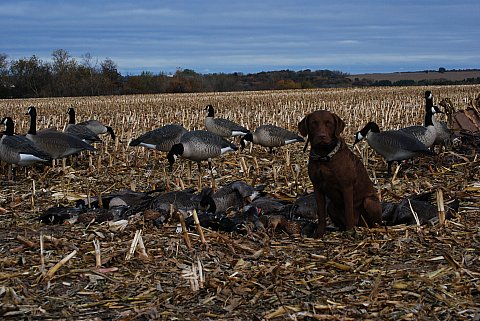 I did mostly all these retrieves so I was getting fit today.