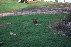 I Glory chucked all this wood from the wood pile to the middle of the lawn.