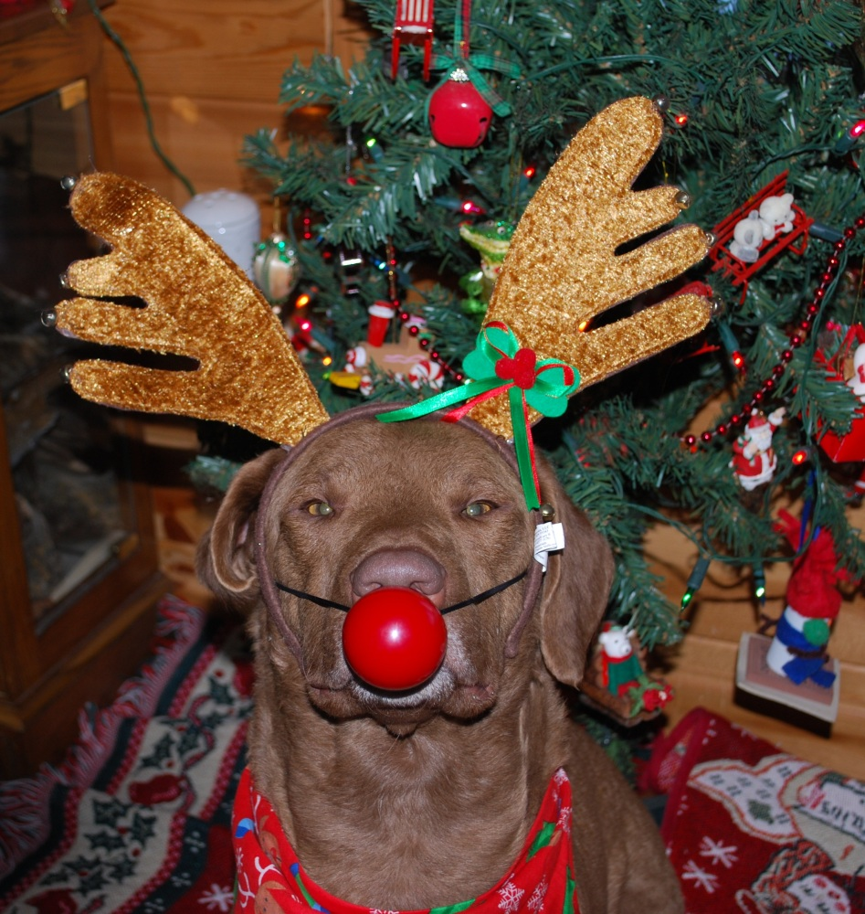 Wordless Wednesday~Raindeer Gman (1/2)