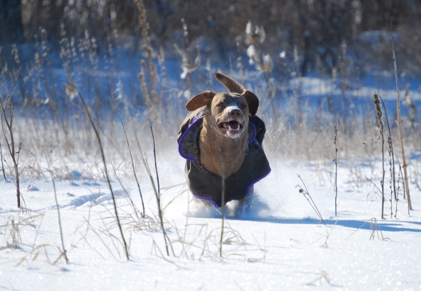 We run at full speed through the deep snow.