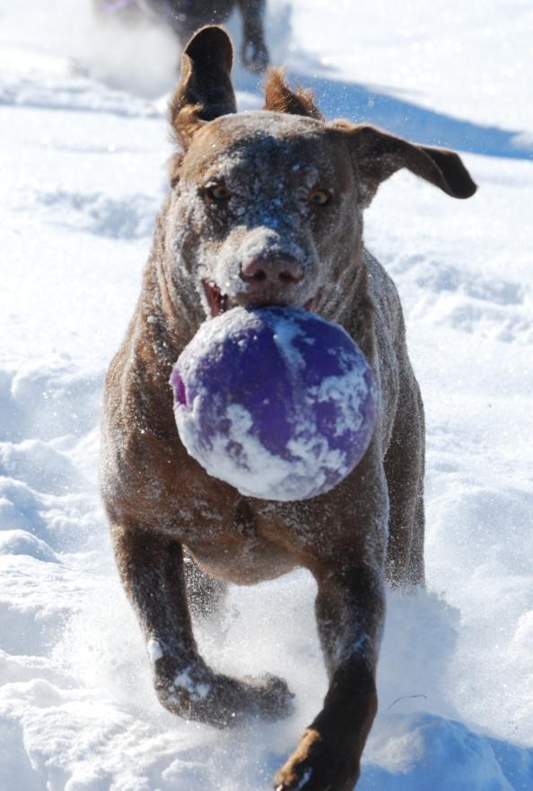 We play fetch.