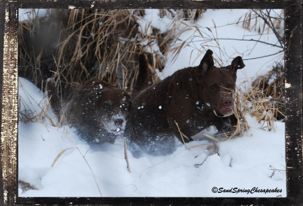 Nellie and Glory climbing back out of the creek.