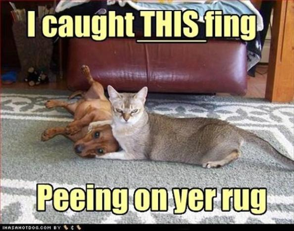 funny-cats-and-dogs-peeing-on-the-carpet1