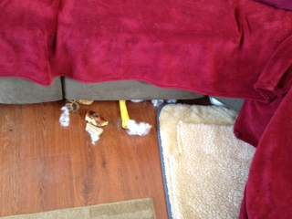 What do we have here? Rawhide, fuzz from toy....