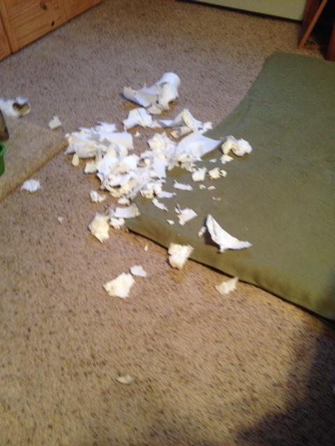 Paper towel explosion!