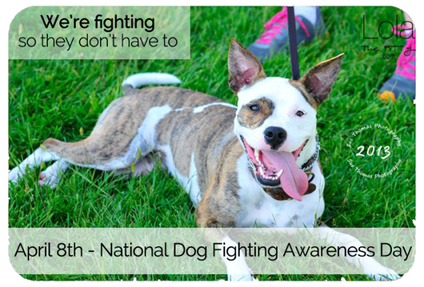Dog-Fighting-Awareness-LolathePitty