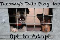 TuesdaysTailsBlogHopOfficialBadge_zpsb5025ffe