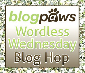 Wordless Wednesday~Dueling Jumps  (2/2)