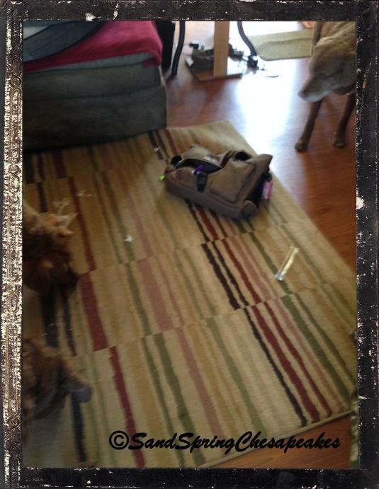 My new solvit pack on the floor.