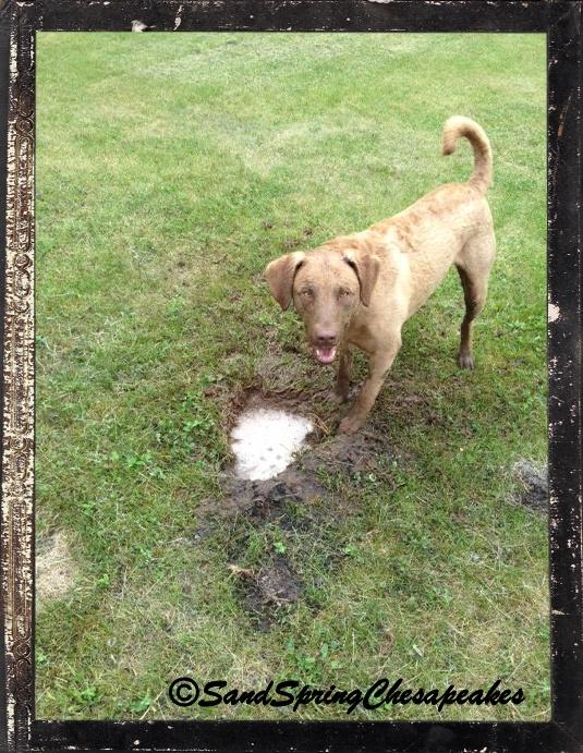 More digging.